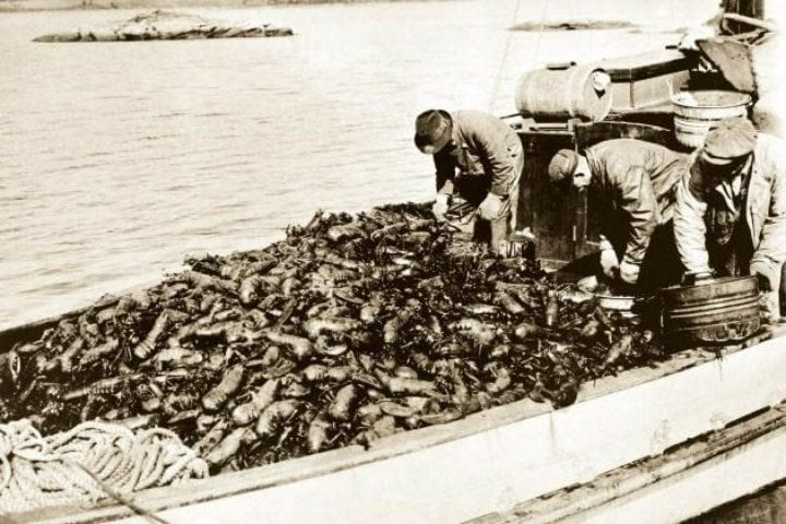 The Lobster for the Rich was Once the Food for Prisoners and Slaves
