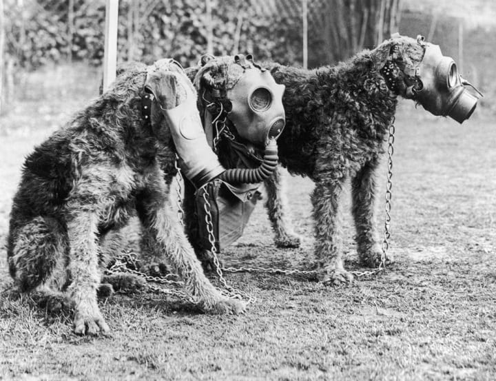 In 1939, England wiped out nearly 500,000 pets — and yeah, it's as screwed up as it sounds